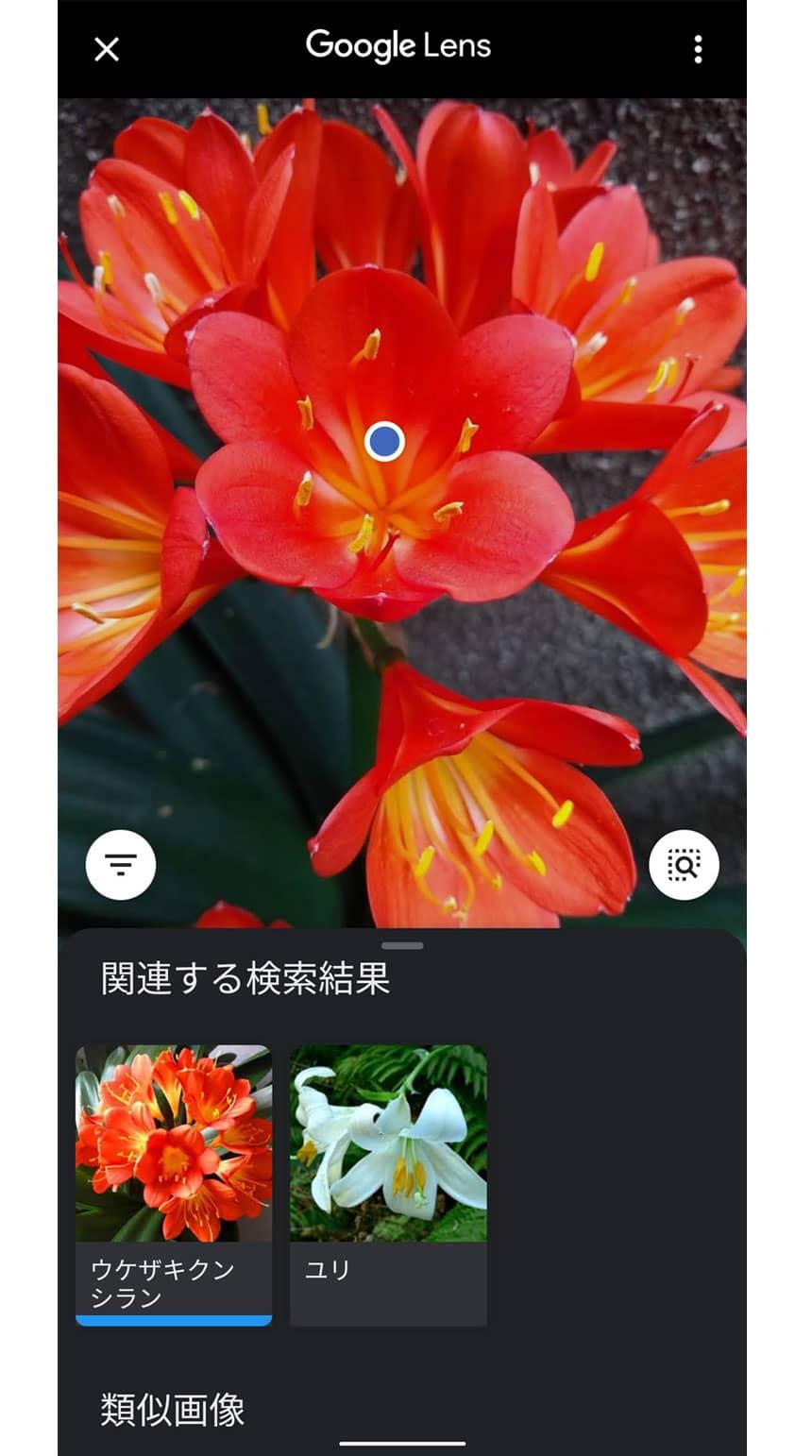 Googleレンズで植物や動物の名前もわかる